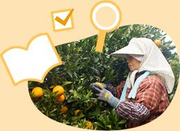 かごしまの農林水産物認証制度(K-GAP)とは