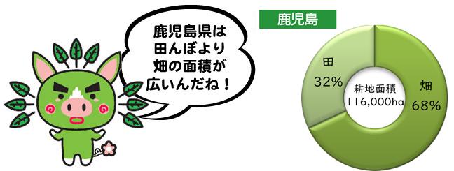 鹿児島県は田んぼより畑の面積が広いんだね!