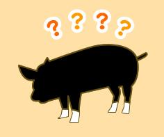 全国的にも人気の黒豚!六白黒豚のクイズです!