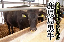 肉用牛(黒毛和種)