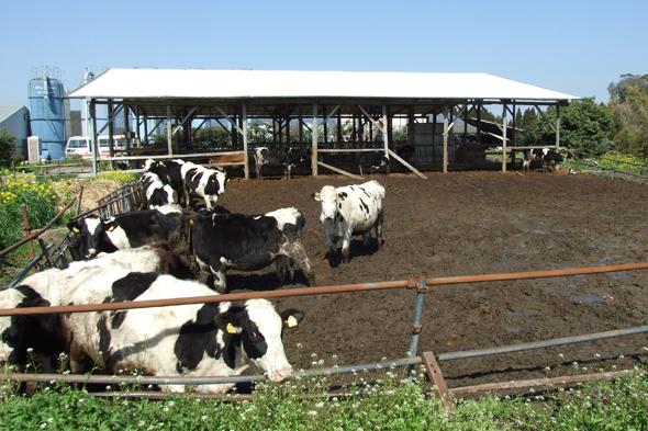 県酪農協牛乳