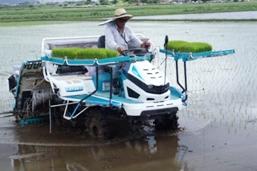水稲の作り方