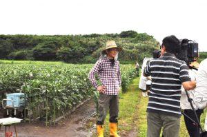 IPM実践ほ場で取材を受ける前川部会長(いぶすき農協指宿地区オクラ部会)